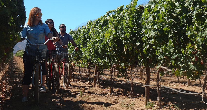 this is how they tour the vineyard at Corona del Valle